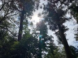 二見の木洩れ日.jpg
